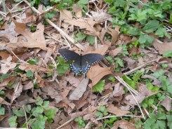 Appalachian Trail 115