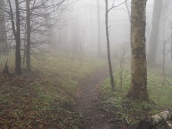 Appalachian Trail 181