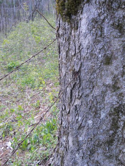 Appalachian Trail 266