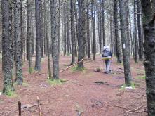 Appalachian Trail 349