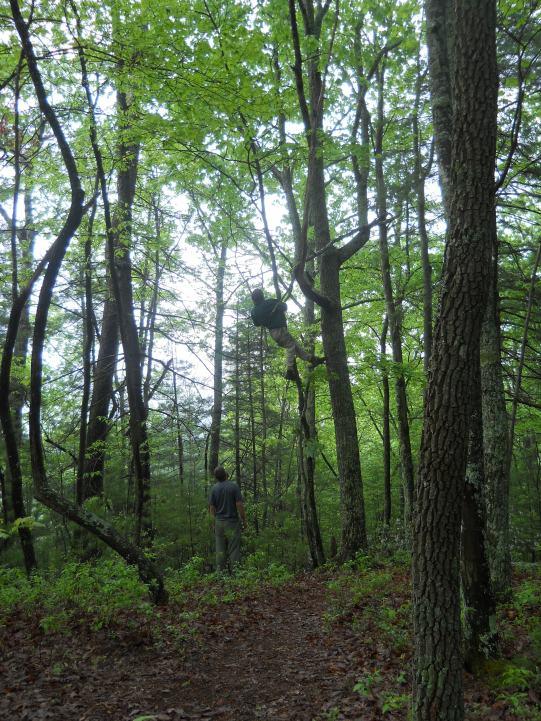 Appalachian Trail 426