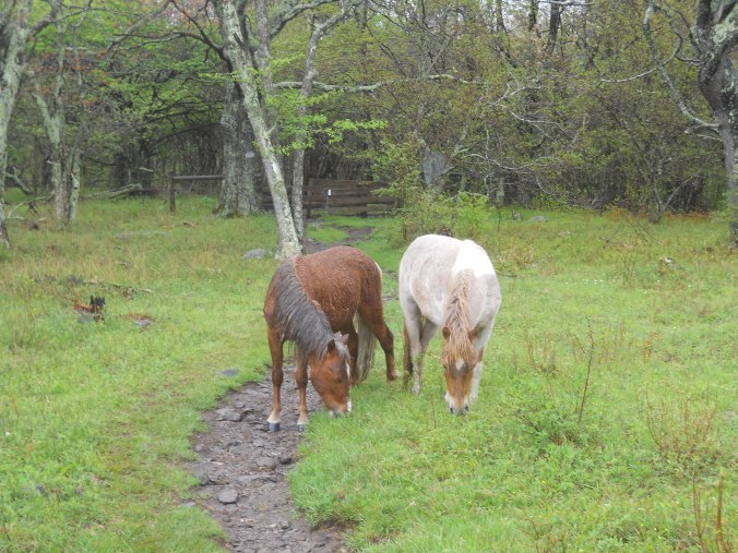 Appalachian Trail 452
