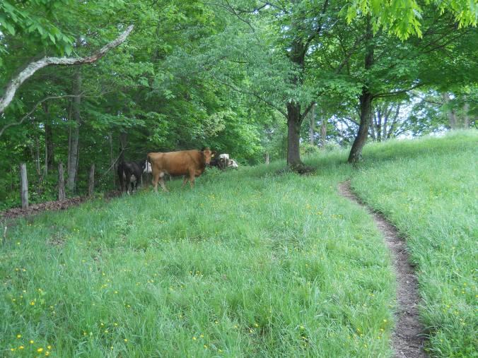Appalachian Trail 485