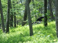 Appalachian Trail 631