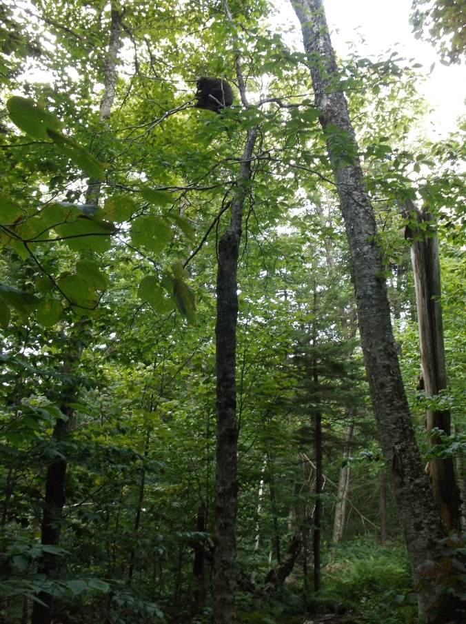 Appalachian Trail, Part II 157.JPG