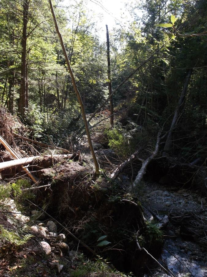 Appalachian Trail, Part II 180.JPG