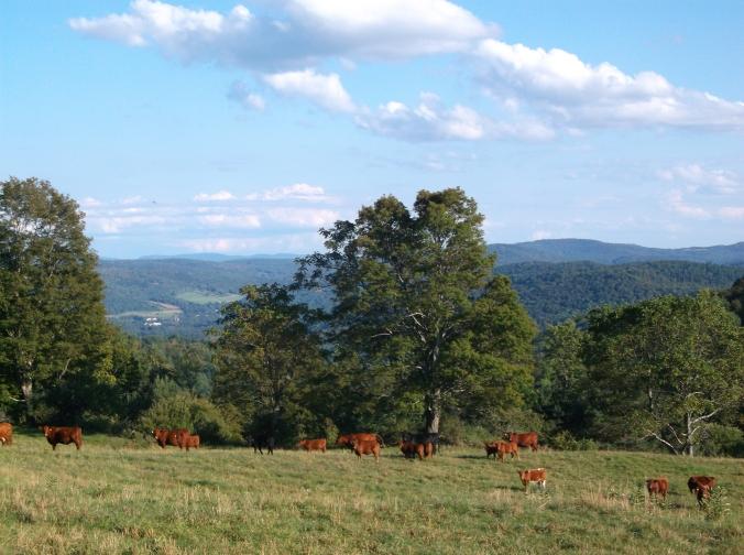 Appalachian Trail, Part II 223.JPG