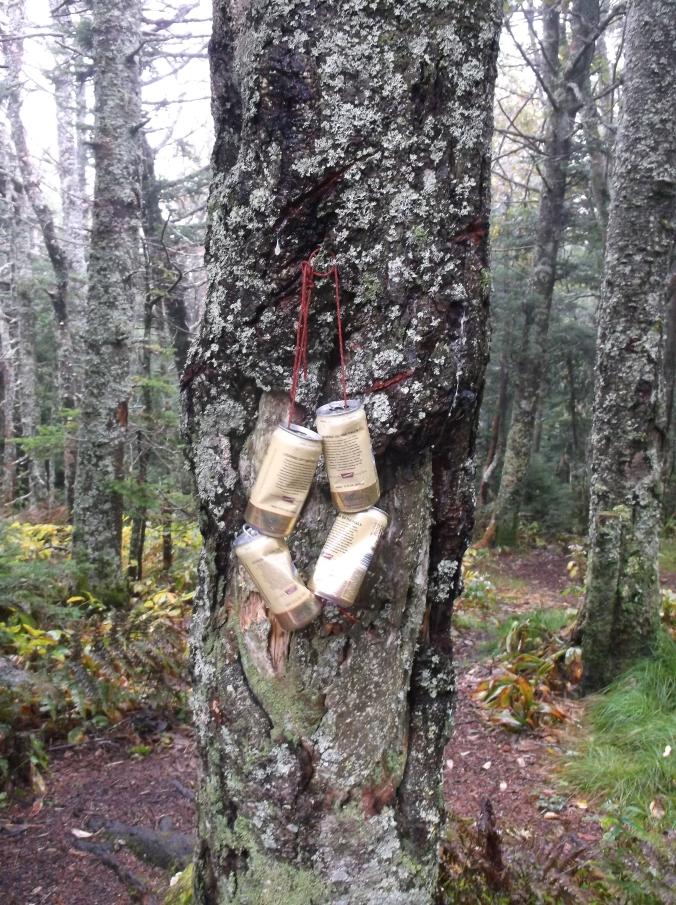 Appalachian Trail, Part II 237.JPG