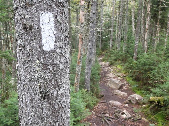 Appalachian Trail, Part II 319
