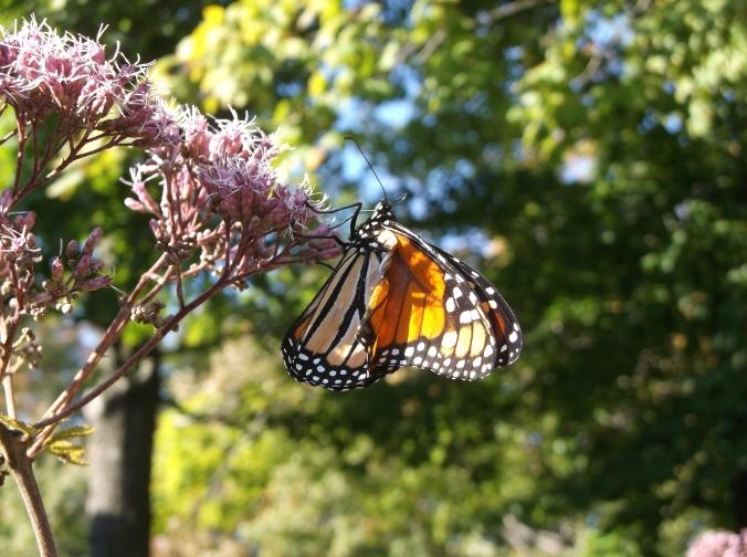 Appalachian Trail, Part II 357